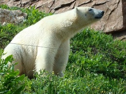 Ours polaires Marineland